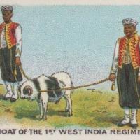 British Military Mascot - Goat